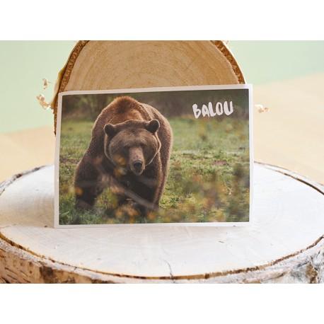 BÄRENWALD Müritz Bären Aufkleber - vegan